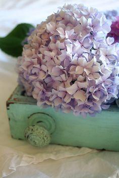 Purple hydrangeas in green container