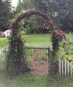 A grapevine arbor festooned with purple clematis provides an elegant entrance to a small vegetable garden.
