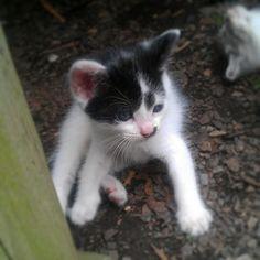 #cute kitty #meow