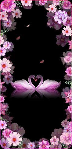 wallpaper iphone x Swan Wallpaper, Wallpaper Nature Flowers, Beautiful Flowers Wallpapers, Flower Phone Wallpaper, Beautiful Nature Wallpaper, Heart Wallpaper, Butterfly Wallpaper, Cellphone Wallpaper, Pretty Wallpapers