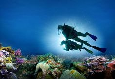 Facebook/G+: If you happen to visit Malvan, then don't miss out scuba diving. Due to clear water Malvan is ideal for various water sports. #ScubaDiving