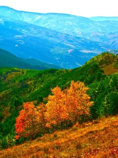 Early Autumn color changes in Vail, Colorado, delight the photographer's eye and enhance the hiking experience. I captured this image while hiking on Vail Mountain, Vail, in September 2013.