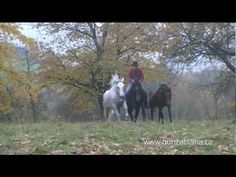 Honza Blaha: Well-edited video showing his amazing work with a group of horses.  He was a Parelli student way back.  Chech republic.