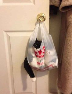 This cat who has no idea how she got herself in this predicament.
