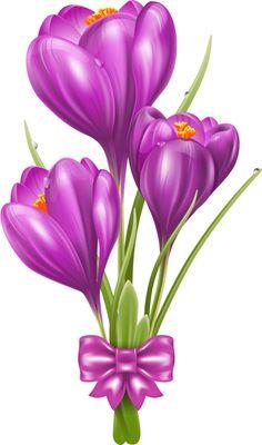 Free and public domain Crocus clip art. Art Floral, Floral Rosa, Floral Drawing, Flower Images, Flower Pictures, Purple Flowers, Spring Flowers, Clip Art, Flower Clipart