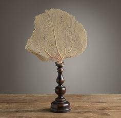 """Restoration Hardware - Andaman Coast Natural Sea Fan $119 Like a lovely piece of underwater lace, this sustainably harvested sea fan is a natural work of art. Each one is unique and showcased on a carved wooden stand.     14½""""W x 2¾""""D x 20""""H"""