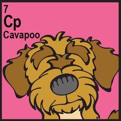 The Daily Mutt – Cavapoo