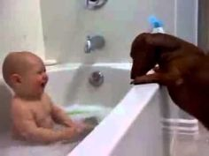 Hysterical baby, dachshund  dogs, & bath time. If this doesn't brighten your day, nothing will!!