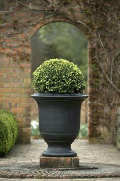 A Geo Rok French Style urn at Cloudehill. A Geo Rok French Style urn at Cloudehill. Boxwood Garden, Garden Urns, Boxwood Shrub, Cacti Garden, Formal Garden Design, Jardin Decor, Urn Planters, Formal Gardens, Backyard Landscaping