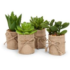 Set of 4 artificial succulents wrapped in burlap. Add these stylish items to your everyday decor or arrange them as part of your tablescape. assorted artificial mini succulents H set of 4 Tin Can Crafts, Diy Home Crafts, Succulent Arrangements, Planting Succulents, Succulent Ideas, Succulent Favors, Potted Plants, Cactus Wedding, Wedding Plants