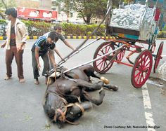 PLEASE SIGN and share - speak Up for Mumbai Horses