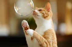 Bubble   Flickr - Photo Sharing!