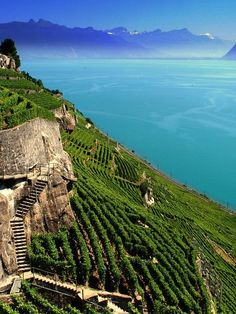 Vineyards on the Lake Geneva, Vaud, Switzerland