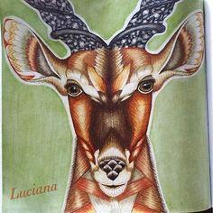 Antílope do livro Wild Savannah da Millie Marotta. Adorei o antílope mas não…