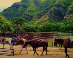 Yellow Raincoats   Kualoa Ranch Hawaii  8 X 10 by MuzettasWaltz, $20.00