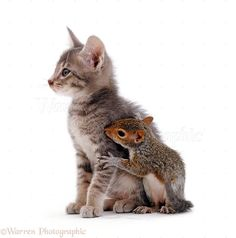 Friends: Kitten & Squirrel.