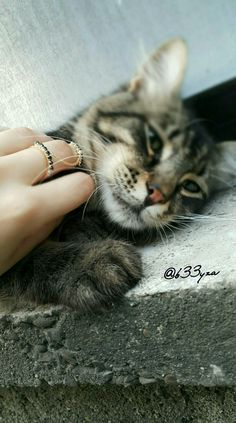 Kediler güllere benzer,eğer seviyorsanız tırnakları canınızı acıtmaz#Katze