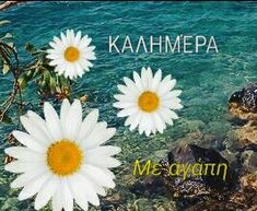Kalimera with love