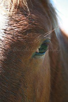 Seeing the eye