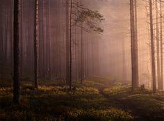 Татьяна Кондакова / Canon EOS 5D Mark II / природа, режимный свет, туман, лес, путешествие