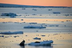 The Antarctic Photography Exhibition collects the best photographs from the…