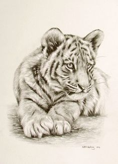 Tiger Bleistiftzeichnung Drawings of animals Tiger Sketch, Tiger Drawing, Tiger Art, Drawing Drawing, Tiger Cubs, Drawing Ideas, Tiger Painting, Drawing Faces, Drawing Tips