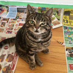 То самое чувство когда пересматриваешь свои детские фотки Jokes - Kitten born with dwarfism is half the cat but twice as cute