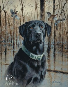 Metal Signs / Ducks Unlimited - Great Retrievers