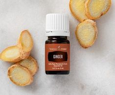 Looking for pure ginger essential oil? Young Living Ginger oil is warm and energizing. Order yours today. Ginger Essential Oil, Essential Oil Uses, Young Living Essential Oils, Healthy Foods To Eat, Healthy Life, Ginger Plant, Therapeutic Grade Essential Oils, Oil Benefits, Massage Oil