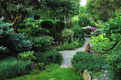 the perennial garden in mid July    www.cadysfallsnursery.com