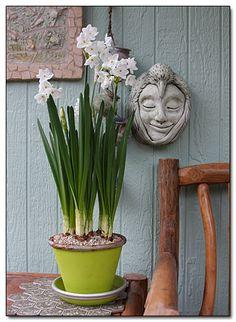 #pottery #planters #