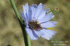 #Flor #abeja #Polen