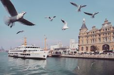 The seagull swarm of Haydarpasa, Istanbul. Urban Life, Love, Fine Art Photography, Morocco, Istanbul, Turkey, Germany, Media Specialist, Holiday Travel