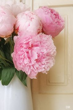 peonies...now if only mine would bloom!