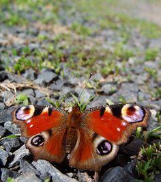 Zvířata jsou naši přátelé - motýl