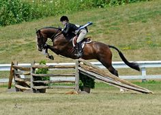 """""""This is a super hunter derby photo!""""  Click to see what else Rob has to say."""