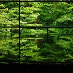 緑が織りなす幻想的な世界。2ヶ月間だけの幻「瑠璃光院」の青紅葉が美しすぎる2016