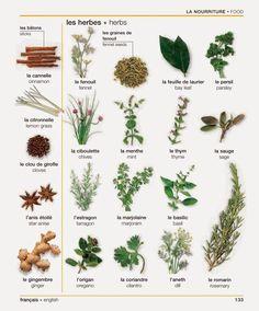 Vocabulaire : les herbes