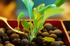 Residents learn benefits of container gardening. Lets know more about it here.