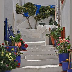 Flowers on Stairway, Naxos by Peter Hammer