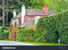 Quaint Roadside House With Creeper Covered Walls . Old Ancient Walls Surrounding The Property Set In Lush Green Woodland, Mostly Hidden With The Tiled Roof And Chimneys Visible Stock Photo 518621530 : Shutterstock Lush Green, Creepers, Woodland, Royalty Free Stock Photos, Sidewalk, Walls, Outdoor Structures, Cover, Pictures
