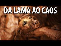 DA LAMA AO CAOS - GIRO DE QUINTA - YouTube