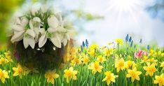 Как изглежда красивата ти пролетна снимка?