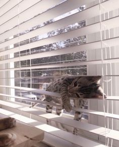 Cute kittens are fun — Tired… Cute Kittens, Cats And Kittens, Ragdoll Kittens, Bengal Cats, Siamese Cat, Cute Little Animals, Cute Funny Animals, Funny Cats, Funny Vid