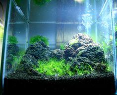 #aquascape #aquascaping #aquarium #nano