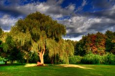Parc USA Foote Branford Arbres HDR Herbe Nature