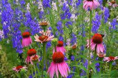 Montana Prairie Wildflower Seed Mix