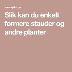 Slik kan du enkelt formere stauder og andre planter