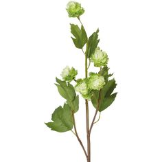 OKA Faux Hop Flower Stem (310 UAH) ❤ liked on Polyvore featuring home, home decor, floral decor, flowers, plants, flowers / foliage, green, artificial flower arrangement, fake flower stems and flower bouquets