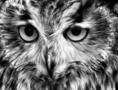 Eagle Owl by Mark Stephen Griffiths